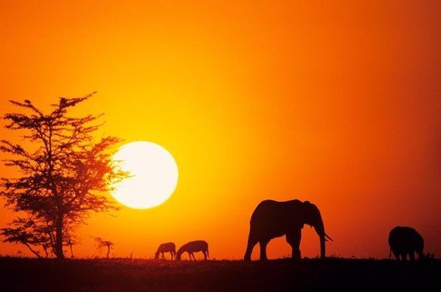 Africa, Elefantes, Kenia