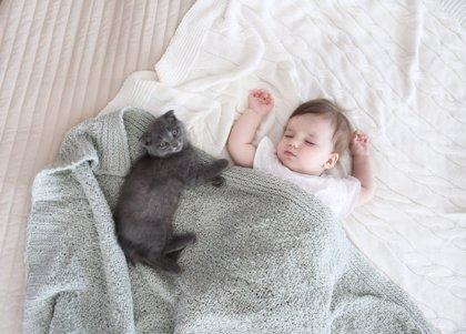 Animales en casa, ¿perjudican a mi bebé?