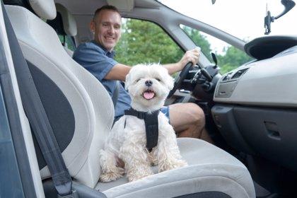 De viaje con tu mascota en el coche: 10 consejos