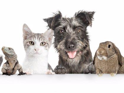 ¿Perros, gatos? ¿Qué mascota se recomienda para cada niño y situación familiar?