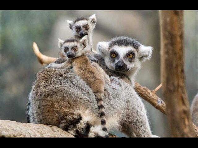 Animales salvajes a un clic: conoce el reino animal sin salir de casa