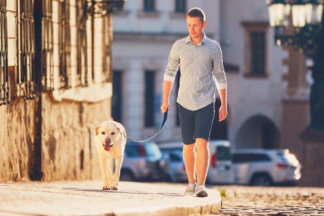 El 85% de los propietarios de mascotas se sienten menos solos