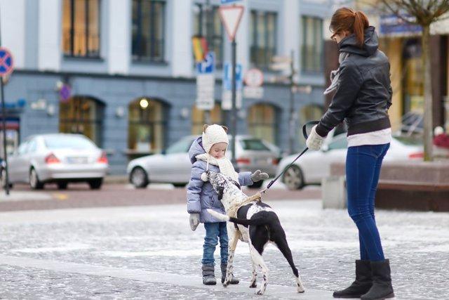Ideas para pasear al perro tras el paso de Filomena