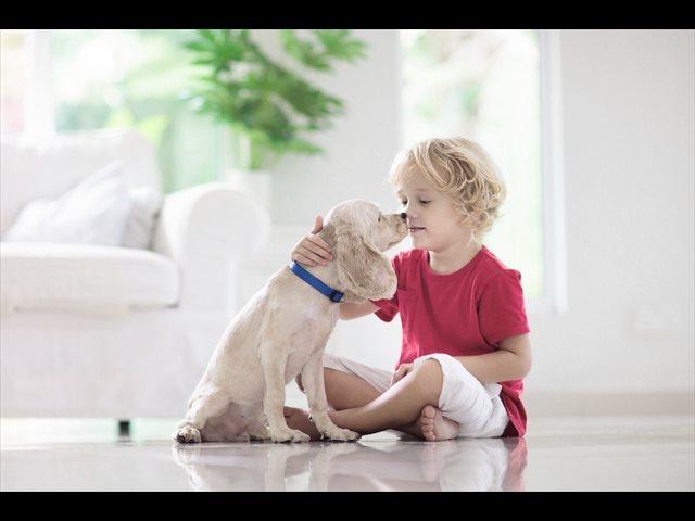 Alergia a los animales, a qué se debe y cómo tratarla