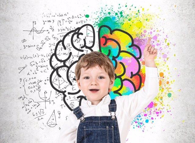 Fases de maduración cerebral