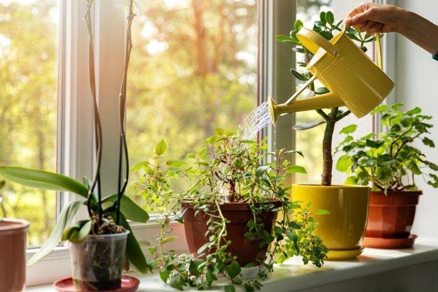 Cómo consseguir unas plantas bonitas tras las vacaciones