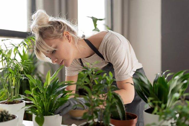 Archivo - Trucos para evitar que tus plantas se sequen durante una ola de calor