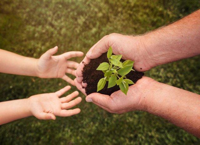 Planes para disfrutar de la naturaleza y plantar más árboles